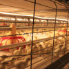 Broiler poultry farm house design/broiler poultry equipment for broiler