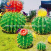 3D LED Motif Lighted Cactus for Christmas Decoration