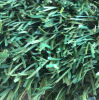 Wholesale Plastic Grass (victoria-25)