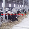 Farm Cow Headlock with Hot-Galvanized Steel Pipe