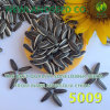 Different Type High Quality Hot Sell Sunflower Seeds to Export
