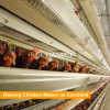 Centralized farming H type chicken cage system