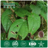 Icariin 50% 60% 80% 98% Epimedium Extract (Horny goat weed extract)