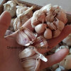2017 Fresh Purple Peeled Garlic From China