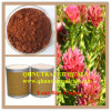 Plant Extract - Rhodiola Rosea Extract