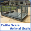 Electronic Scales for Sheep with Rails