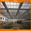 Venlo Multi-Span Glass Greenhouse