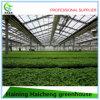 2017 China Supplier Garden Greenhouse