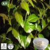 Vine Tea Extract Dihydromyricetin 80%-98% Protecting Liver