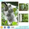 Polypropylene Fabric Spunbond Non Woven Fabric Covering in Banana