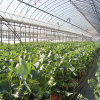 Heat Preservation and Plastic Film Greenhouse