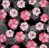 Hight Quality Flower Digital Printing 100% Cotton Fabric Zzc-002