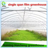 Hot DIP Galvanized Steel Durable Film Green House for Cucumber
