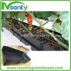 Hydroponic System in Coco Peat for Tomato