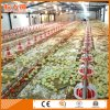 Automatic Broiler Poultry Feeder and Drinker From Factory with One Stop Service