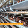 Tianrui Design Hot DIP Galvanized Steel H Frame Automatic Battery Chicken Layer Cages for Sale