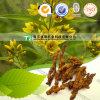 100% Pure Natural Herb Medicine Coptis Chinensis Huang Lian
