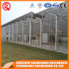 China Agriculture Garden Toughened Glass Greenhouse