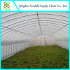 Vegetables/Garden/Flowers/Farm Plastic Film Green House