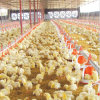 Full Set Poultry Equipment for Broiler Production