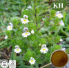 High Natural 10: 1 Eyebright Extract