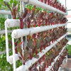 Hot Sale Wind Resistant Hydroponic Greenhouse