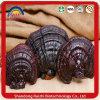 100% Dried Ganoderma Lucidum Reishi Mushroom Wild Ganoderma Lucidum
