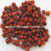 Dried Wild Rosehip Fruits Whole