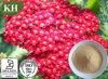 High Quality Achillea Millefolium Extract 10: 1