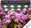 Flowering Switches Hydroponic LED Grow Light for Indoor