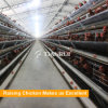 Poultry processing equipment with chicken feeders and drinkers