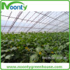 Tomato Hanging Wire for Farm Greenhouse Vegetable accessory