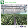 Glass Green House Hydroponics System for Vegetables/Flowers/Fruit