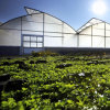 Large Size Gothic Multi-Span Film Greenhouse for Farm/Garden