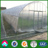 China Low Cost Single Span Plastic Film Greenhouse