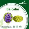 Baicalin Powder, Baicalin Extract CAS: 100647-26-5 (27462-75-5)