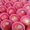 Blush FUJI Apple From Shandong