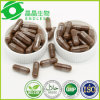 Reishi Mushroom Extract Capsule Herbal Medicine Ganoderma Lucidum Capsule