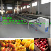 Apple, Mango, Orange, Sorting Machine/Grading Machine