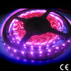 Pink Color of SMD3528 LED Strip Lighting
