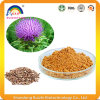 Pure Natural Milk Thistle Extract Powder for Liver Care