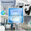 Local Anesthetics Benzocaine HCl with Favourable Price CAS 23239-88-5
