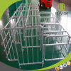 Hot Sale Gestation Stall / Individual Stallwith High Quality for Sows