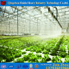 High Quality Multi-Span Glass Greenhouse with Hydroponic System for Agriculture Price for Angriculture&Aquaponics&Cucumber