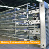 H Frame Automatic Chicken Cage for Poultry Farm for Nigeria