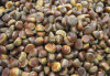 QS New Crop Chestnut Dry Fruit