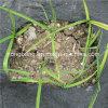 120GSM Black PP Weed Mat for Nursery