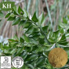 Anti-Inflammatory Butcher′s Broom Extract 3% ~26%UV Ruscosaponins