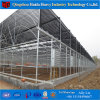 China Professional Multi-Span Agricultural Glass Greenhouse