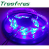 Swimming Pool Lighting 12V 24V LED Strip